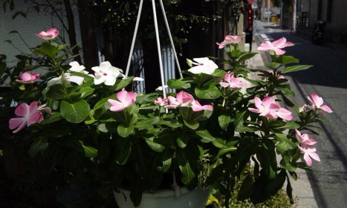 Flowers_20120809