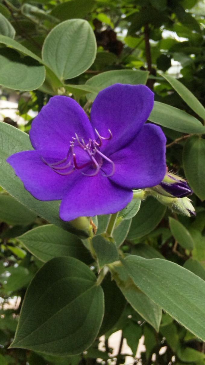 Flower_20120818