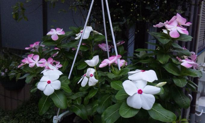 Flowers_20120818