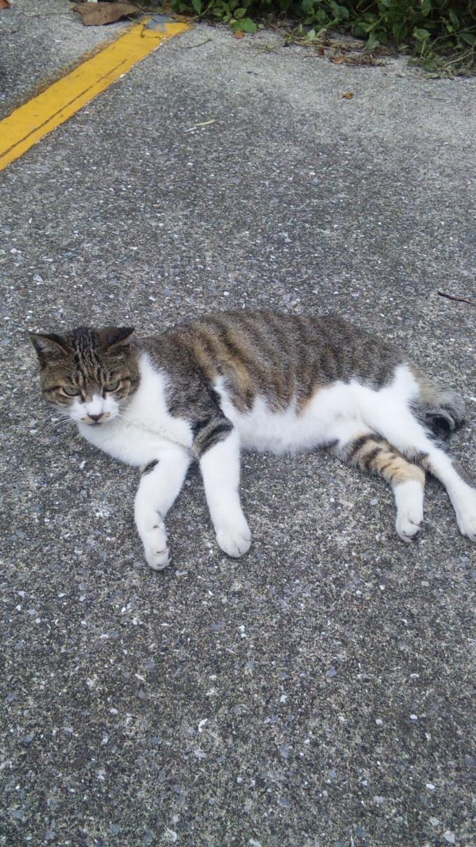 POST   CAT_20120927