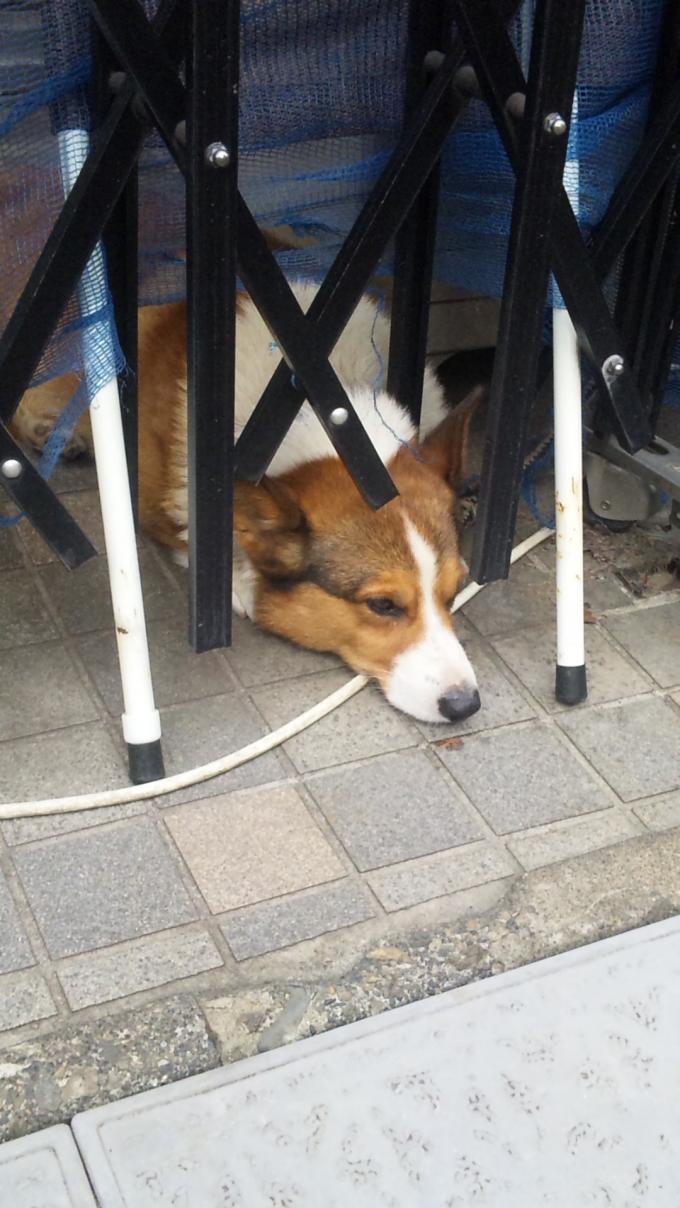 DOG_20120927
