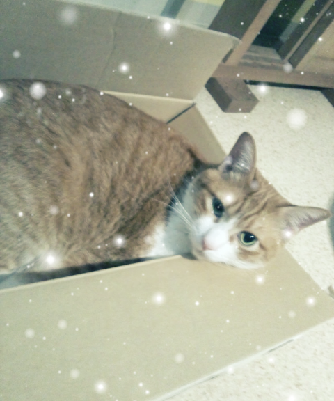 MOMO_20120627