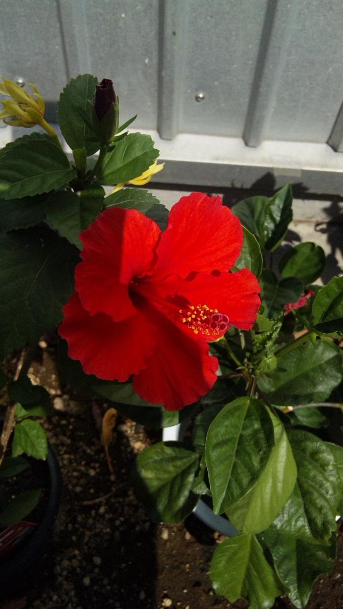 Flower_20120824
