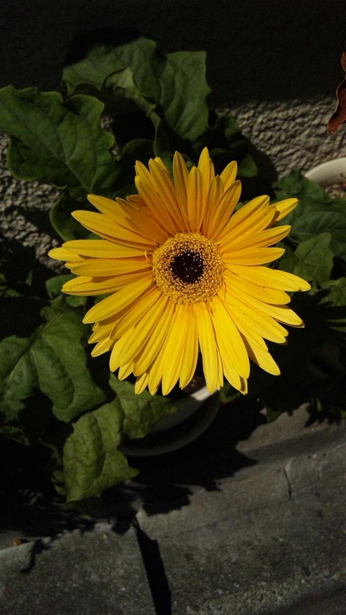 Flower_20120820
