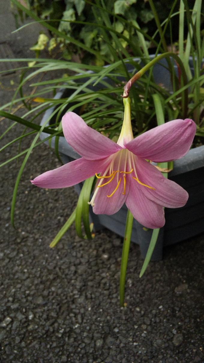 Flower_20120811