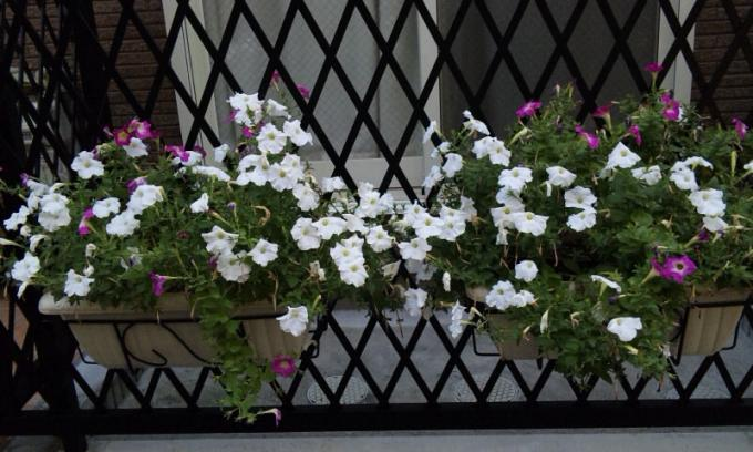 Flowers_20120808