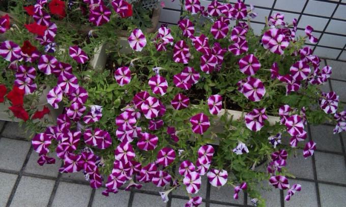 Flowers_20120812