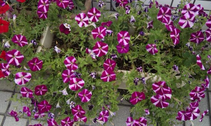 Flowers_20120817