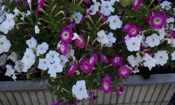 Flowers_20120819
