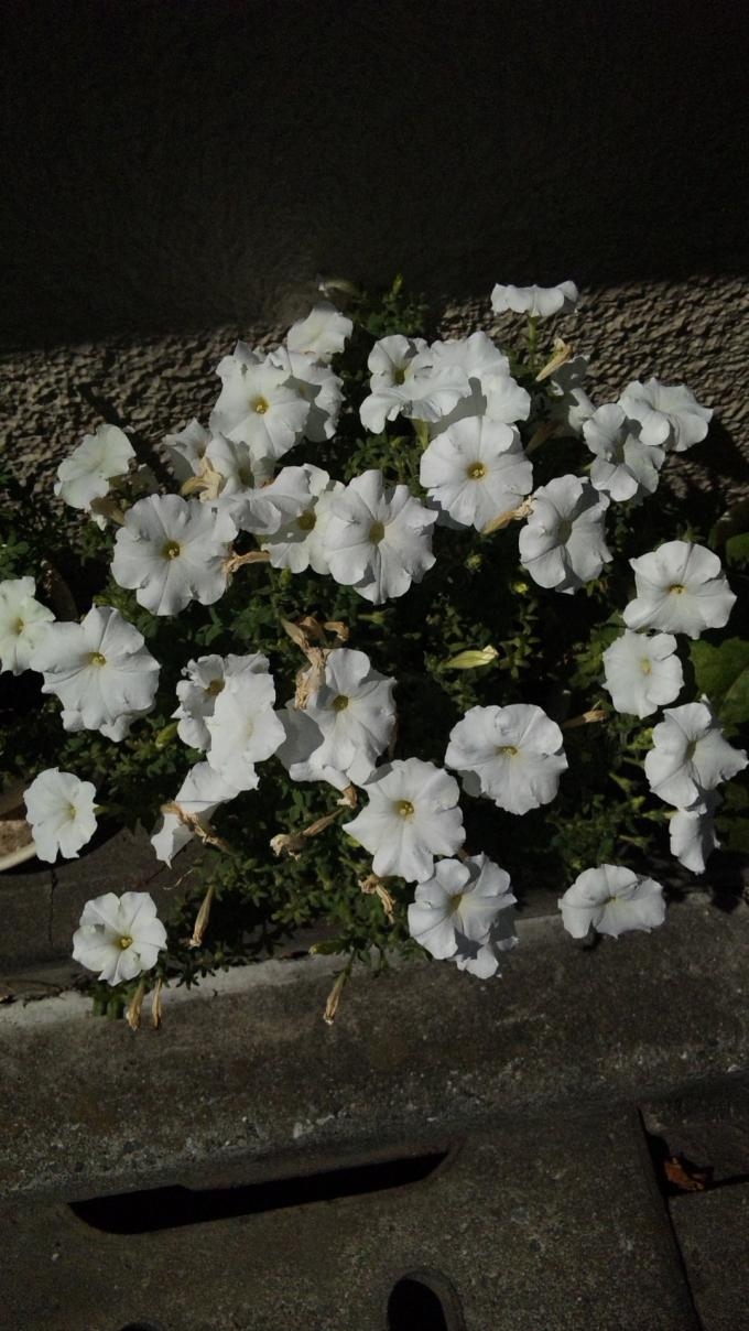 Flowers_20120820
