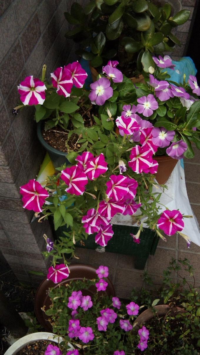 Flowers_20120802