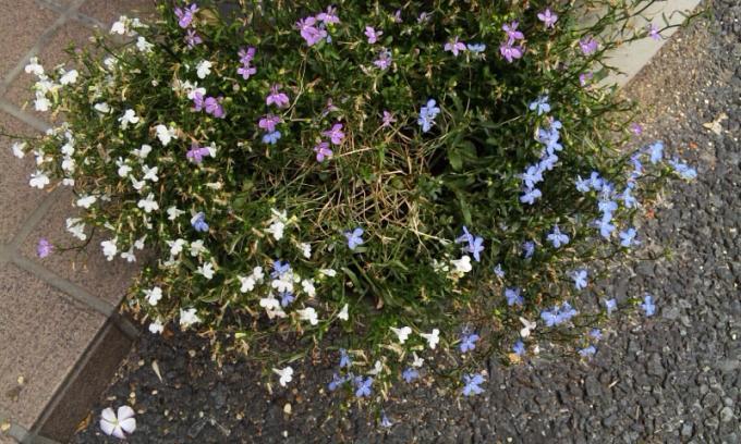 Flowers_20120801