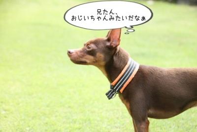 2014_09_15_9999_63.jpg