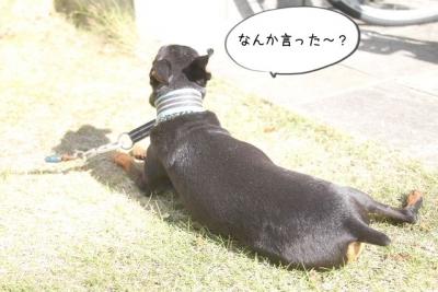 2014_11_03_9999_31.jpg