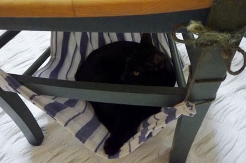 イスの下ハンモック猫