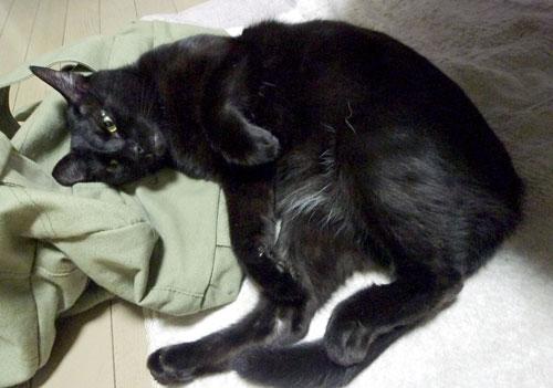 寝ころぶ黒猫