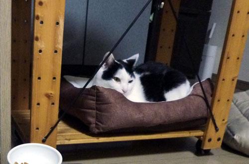 ペットベッドに収まる白黒猫
