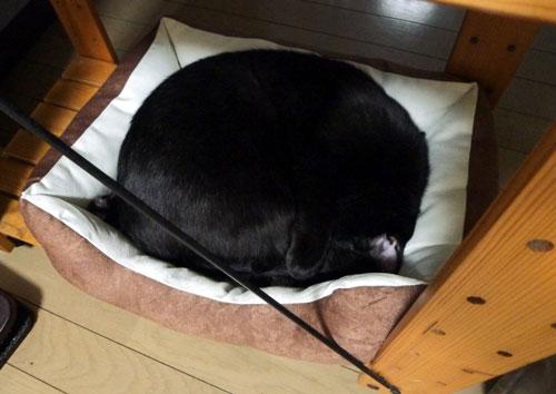 ペットベッドに収まる黒猫