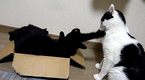 黒猫がブチ猫にパンチ