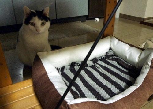 白黒猫とペットベッド