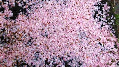 s-桜の花びら