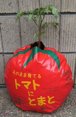 s-トマトにトマト②