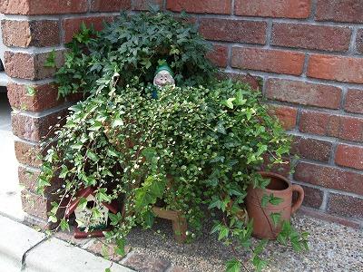 s-庭のグリーン