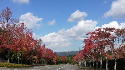 秋も深まりましたね。