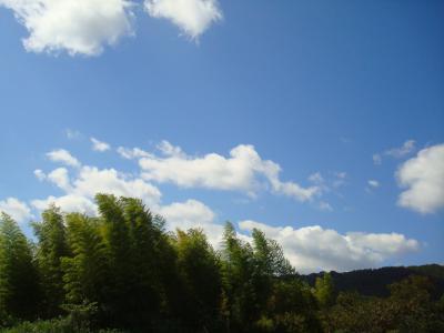 庭からの景色 青空