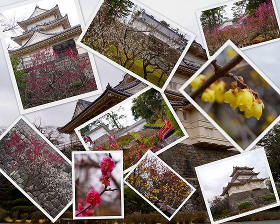 140204小田原城の梅