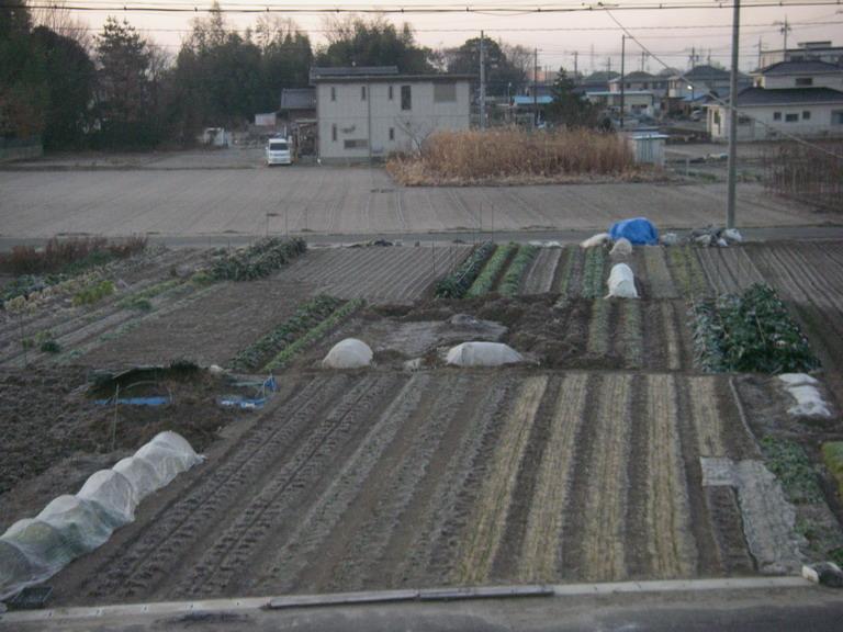菜園№1_13_01_21