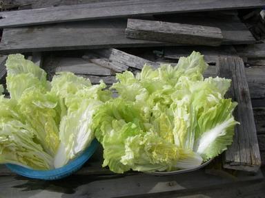 白菜cut13_01_05