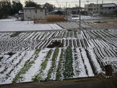 畑の様子(11_01_30)
