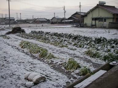畑の様子2(11_02_01)
