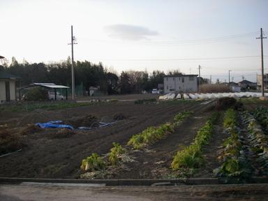 畑の様子(11_02_10)