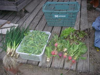 収穫11_04_07