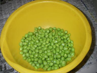 グリーンピース豆11_05_28