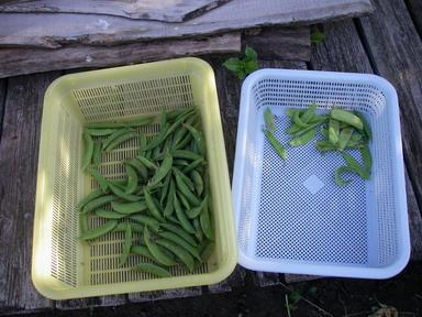 収穫211_05_31