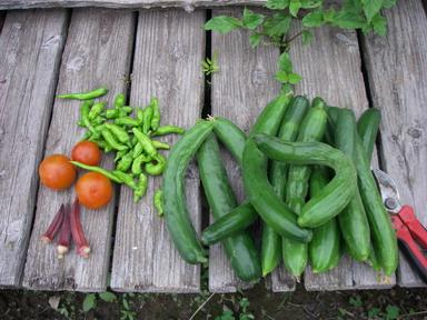 収穫11_07_10