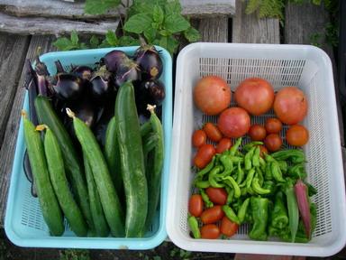 収穫11_07_13