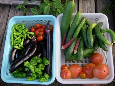 収穫11_07_17