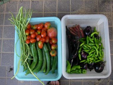 収穫11_07_21