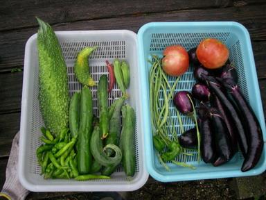 収穫11_07_22
