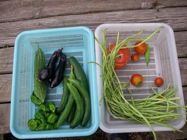収穫11_07_24