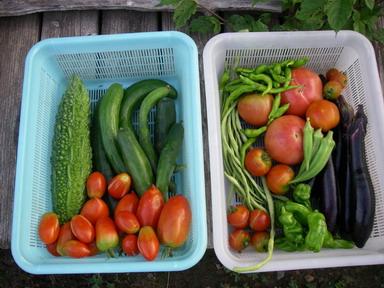 収穫11_07_23