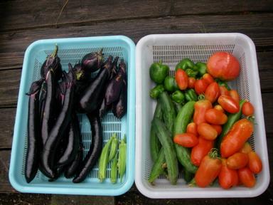 収穫11_07_25
