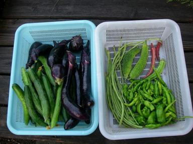 収穫11_07_26