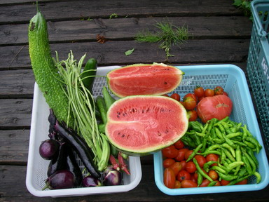 収穫11_07_27