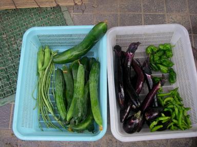 収穫11_07_28