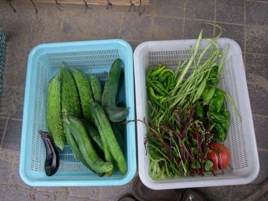 収穫11_07_29